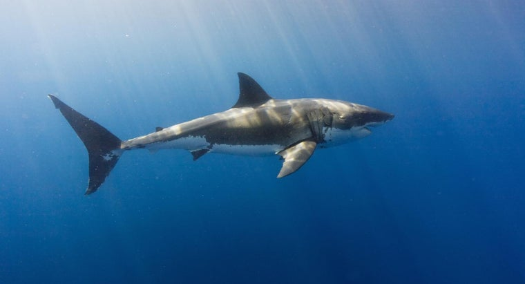 Can Sharks Live in Freshwater?