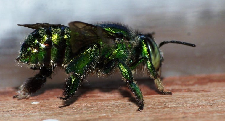 How Can Someone Get Rid of Sweat Bees?
