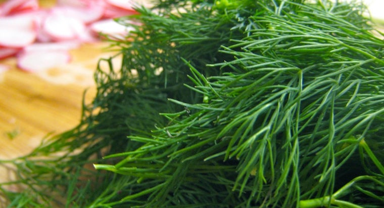 Can You Substitute Dill Seed for Dill Weed?