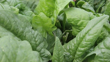 Can You Substitute Fresh Spinach for Frozen Spinach?