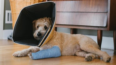 How Can You Tell If Your Dog Has a Broken Leg?