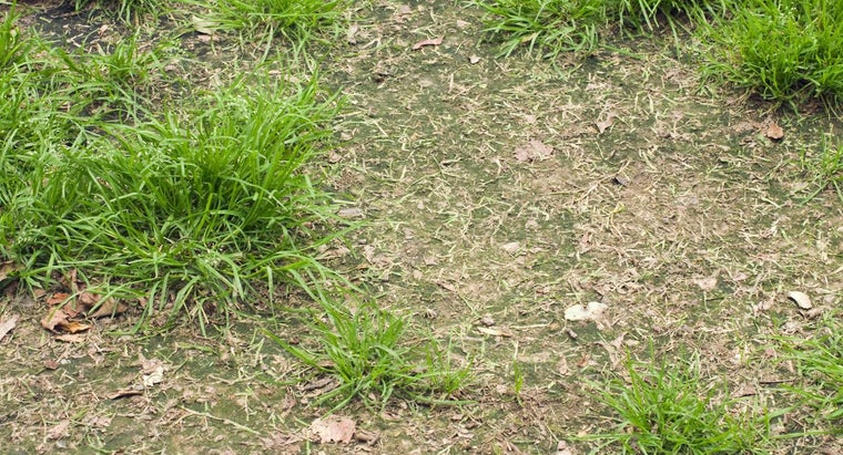 How Can I Tell If I Have Fungus in My Grass?