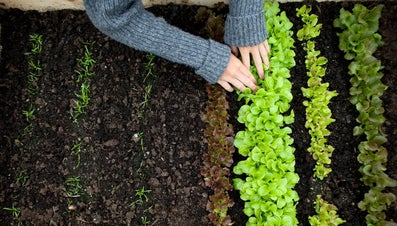 How Can You Tell If Soil Is Good for Planting?