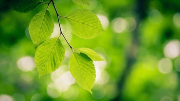Where Can I Find a Tree Leaf Identification Chart Online?