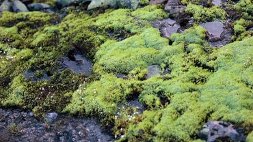 Can I Use Peat Moss for Potting Plants?