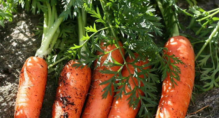 How Do Carrots Reproduce?
