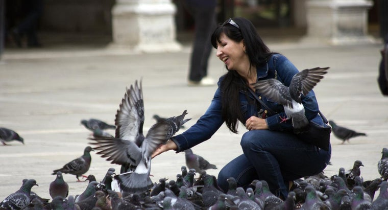 How Do You Catch a Pigeon?
