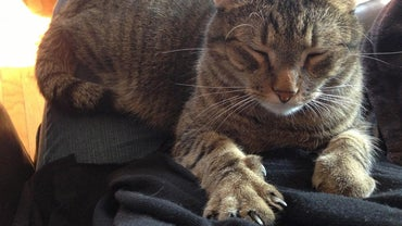 Why Do Cats Knead Their Paws?