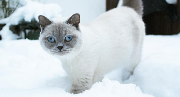 Do Cats Get a Thicker Coat in Winter?