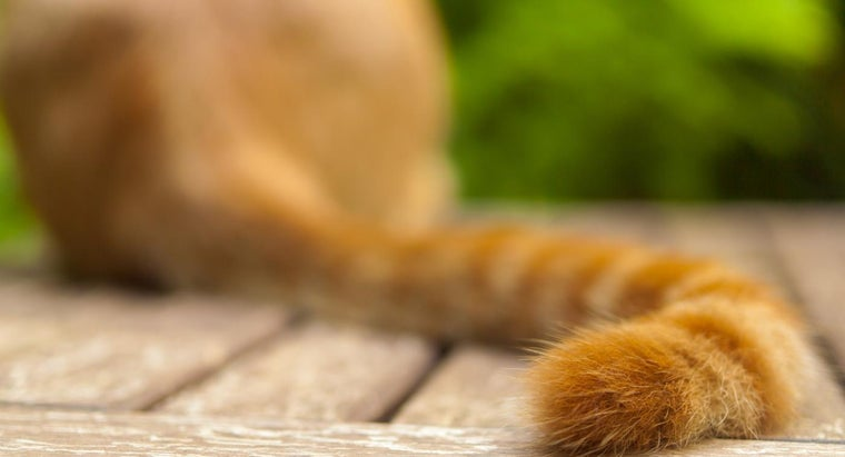 Do Cats Wag Their Tails When They Are Happy?