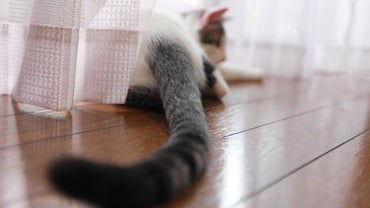 Why Do Cats Wag Their Tails?
