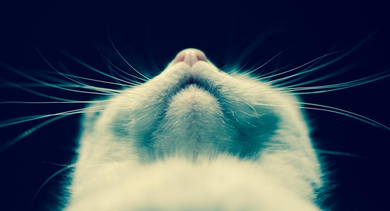 Why Do Cats' Whiskers Break Off?