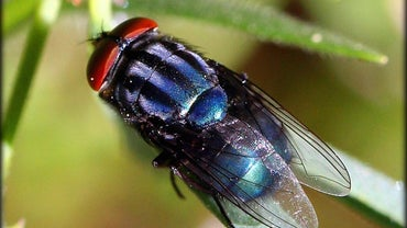 What Causes House Flies?
