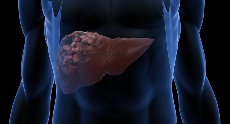 What Are the Causes of Liver Disease?