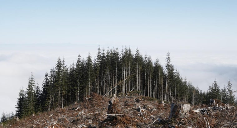 What Will Destruction of Forests Cause?