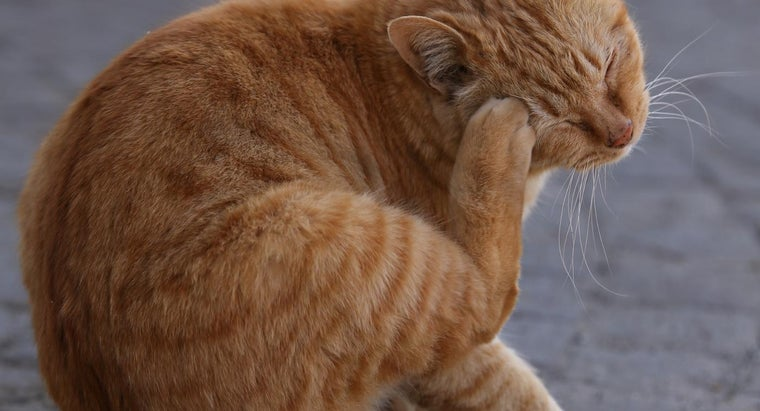 What Causes Skin Rashes on Cats?