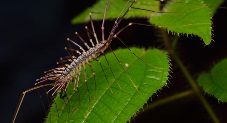 What Does a Centipede Bite Look Like?