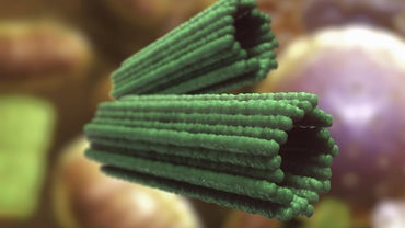 What Does a Centriole Do?