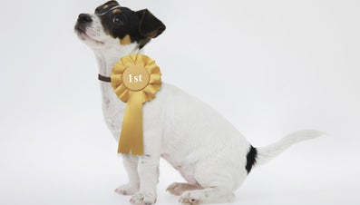 What Is a Champion-Sired Puppy?