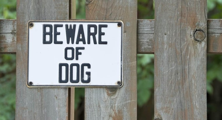 What Are Characteristics of Aggressive Dogs?