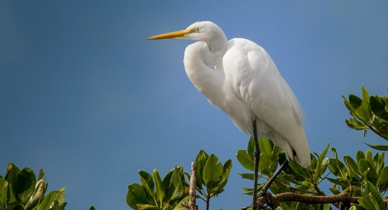 "What Are the Characteristics of Sylvia in the Story of ""A White Heron""?"