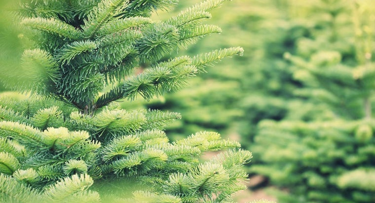 How Many Christmas Trees Are Sold Each Year?
