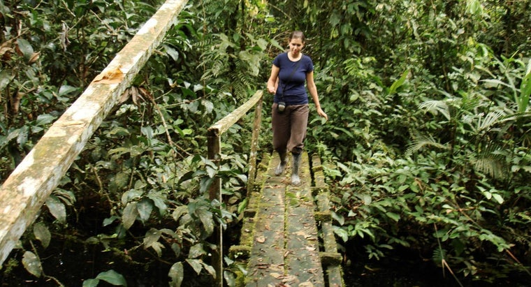 What Is the Climate Like in the Amazon Rainforest?