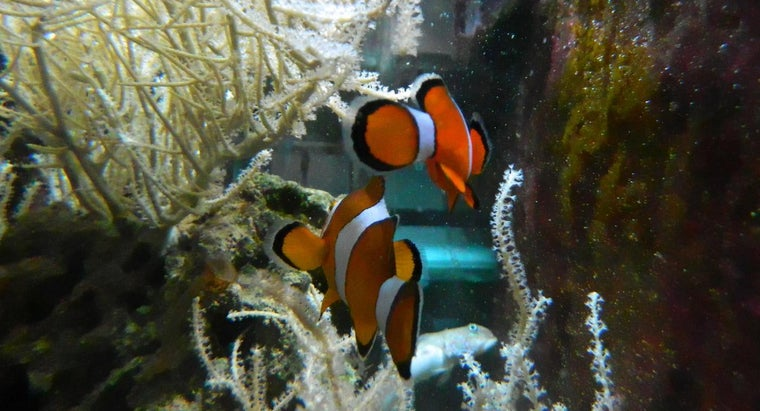 What Are Some Clownfish Enemies?