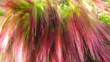 How Do You Color Hair Using Matrix Hair Color?