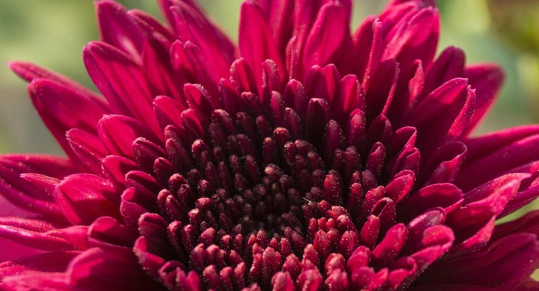What Colors Mix to Produce Magenta?