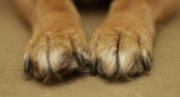 Is It Common Practice to Declaw Dogs?