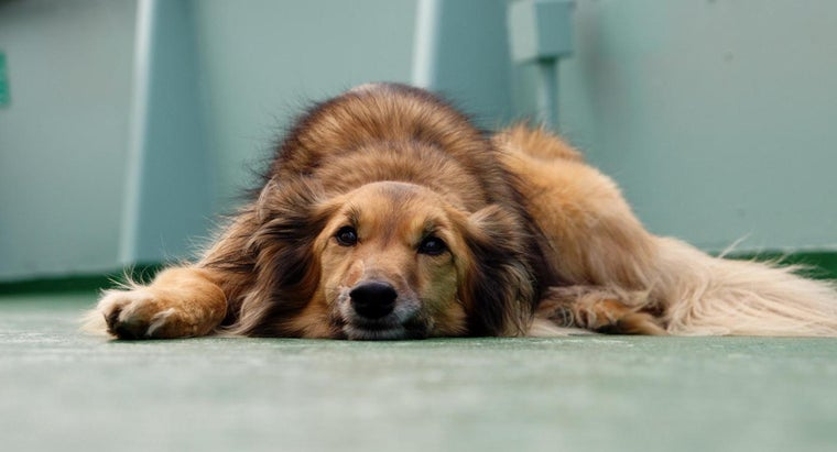 What Are Common Signs of Liver Disease in Dogs?