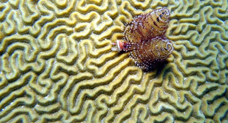 How Does Coral Form?