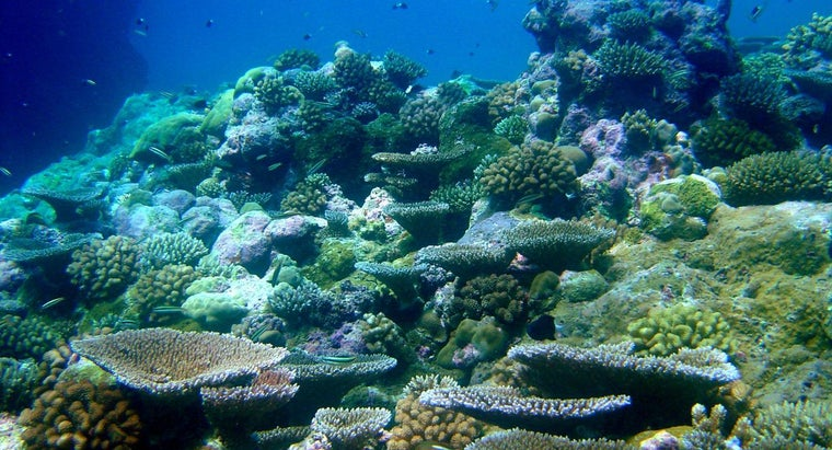 How Are Coral Reefs Made?