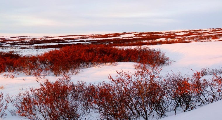 What Are Countries That Include Tundra Biomes?