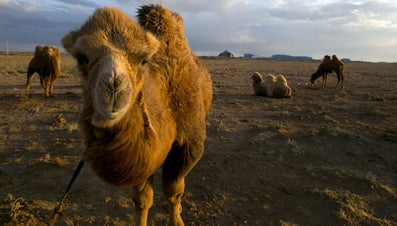 In Which Country Is the Gobi Desert?