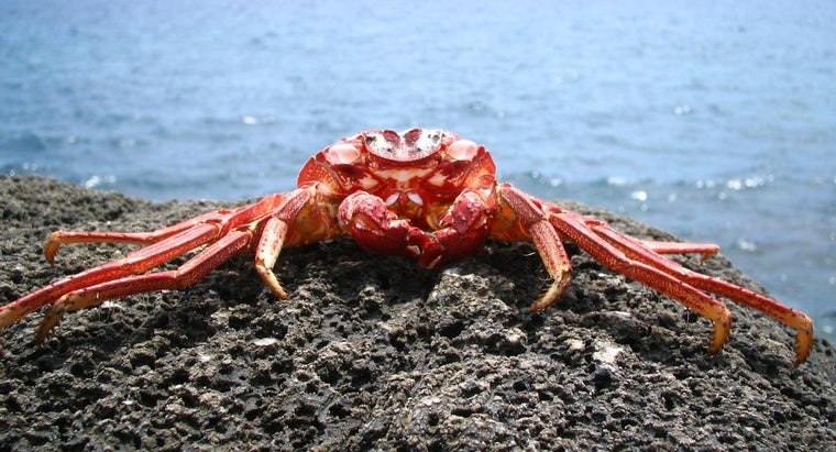 What Do Crabs Eat?