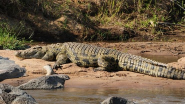 Where Do Crocodiles Live?