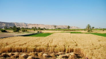 Which Crops Are Grown in Egypt?