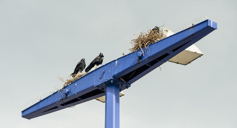 Where Do Crows Build Their Nests?