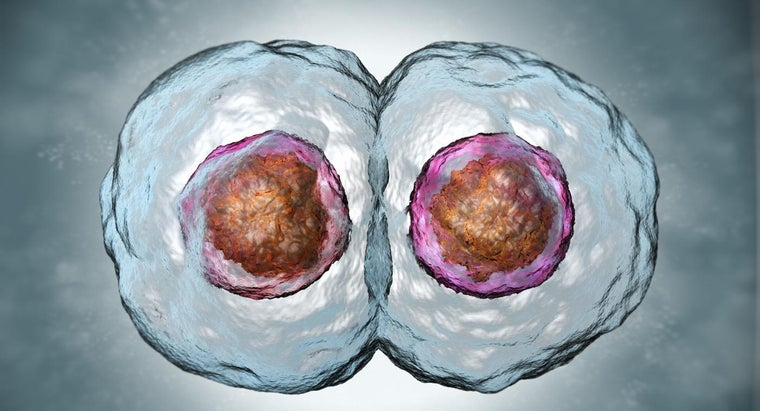 How Do Daughter Cells Compare to Parent Cells?