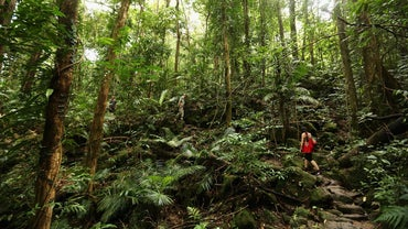 What Are Decomposers in Tropical Rainforests?