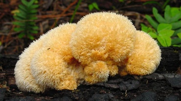 What Is the Definition of Fungi?