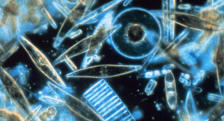 How Do Diatoms and Dinoflagellates Compare?