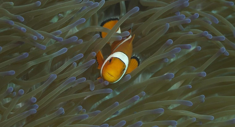 How Did the Clownfish Get Its Name?