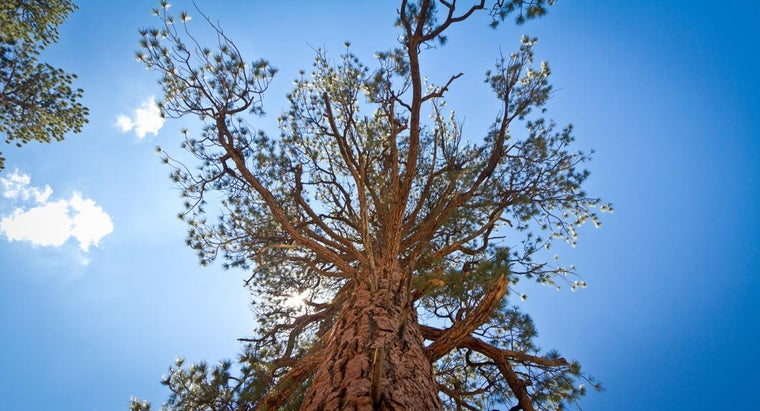 When Did the First Tree Appear on Earth?