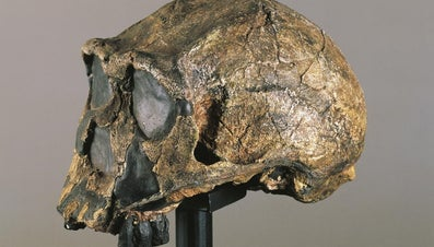 What Did Homo Erectus Wear As Clothes?