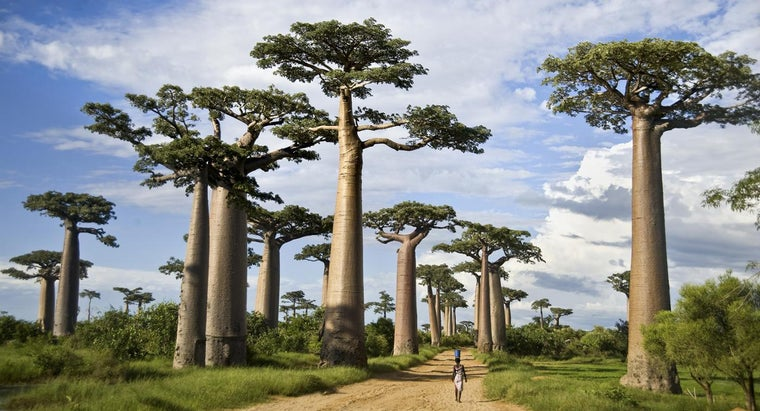 How Did Madagascar Get Its Name?
