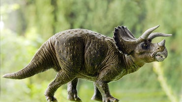 What Did Triceratops Eat?