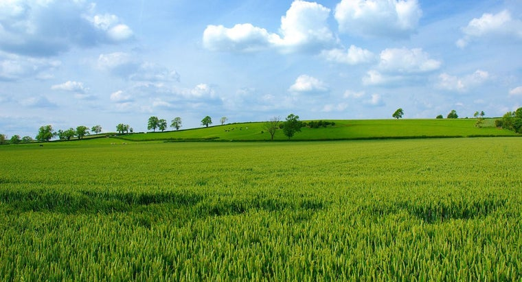 What Is the Difference Between an Acre and a Hectare?